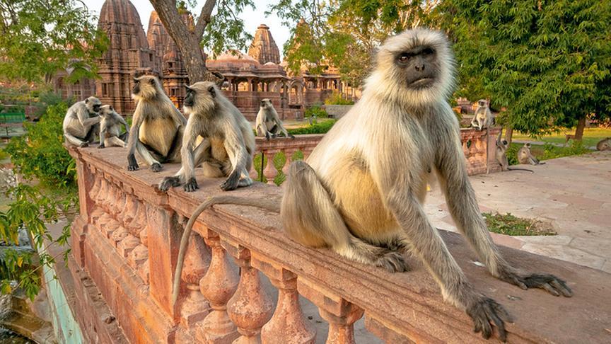 Nachlese im Jänner 2017: Geheimnisvolles Indien
