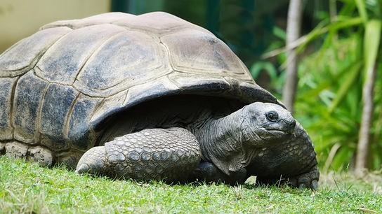 """""""Guten Morgen Österreich"""": Schildkröte Schurli ist das offizielle EM-Orakel"""